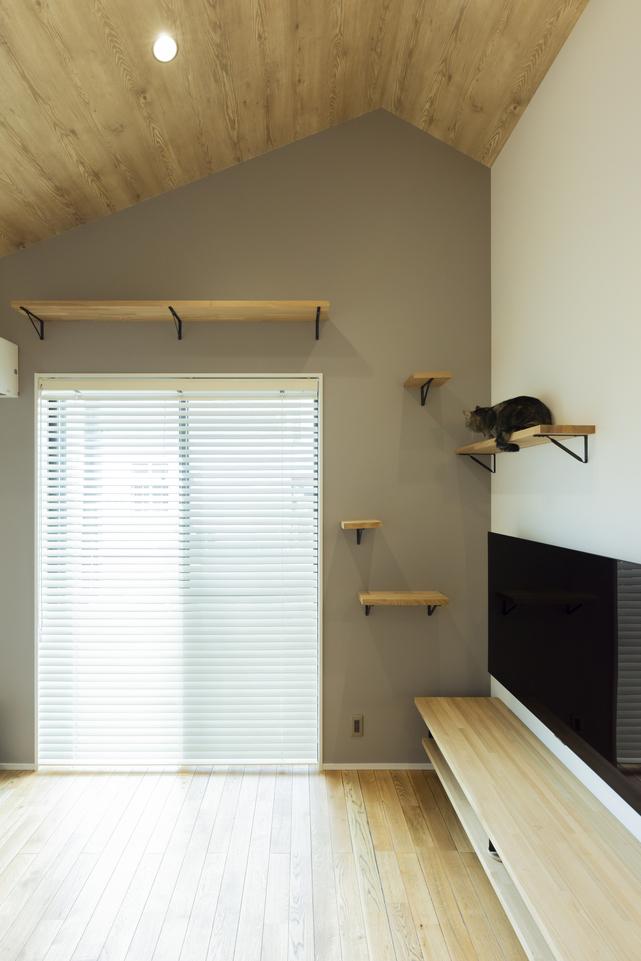 造作のTVボードから壁面にかけてキャットウォークを作り、一緒にくつろぐことができる。