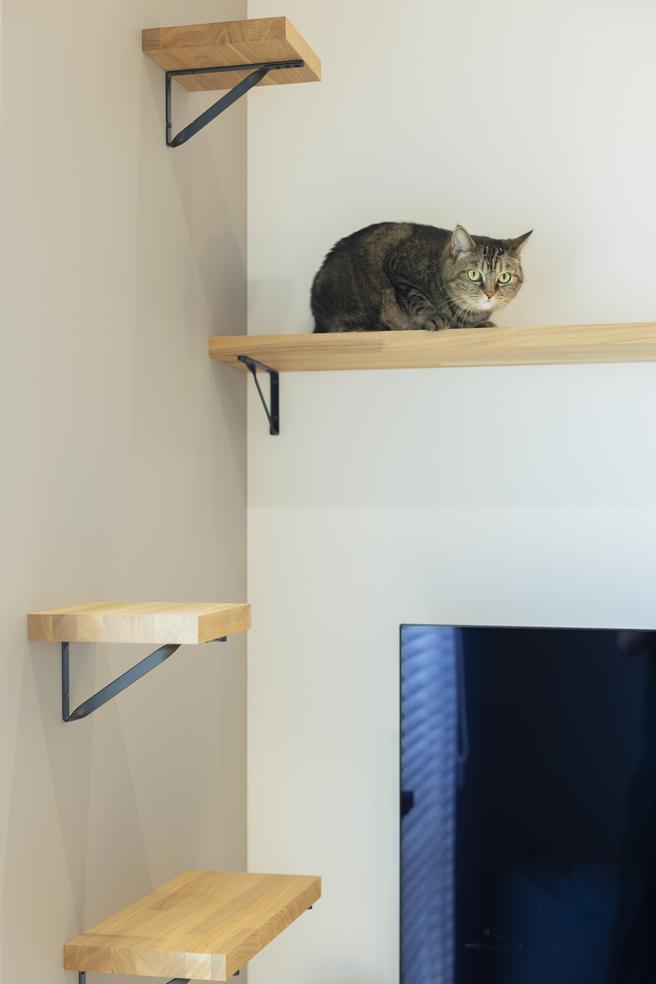 さまざまな高さの板が取り付けられ、愛猫の格好の遊び場に。